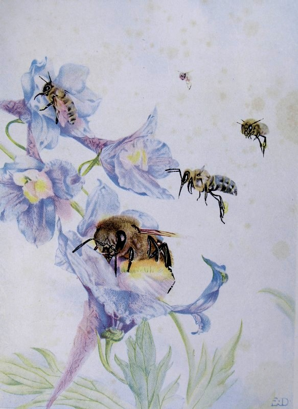 the children's life of the bee chapter, Beautiful flower