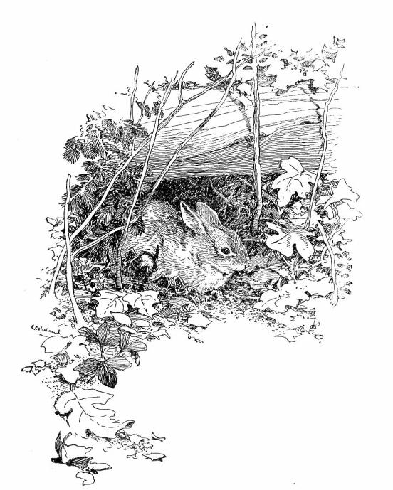 wildwood ways  chapter 7
